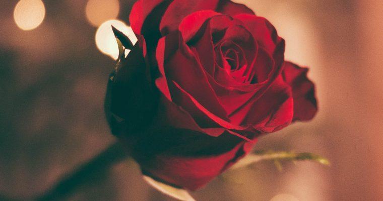 Kracht van rozenwater